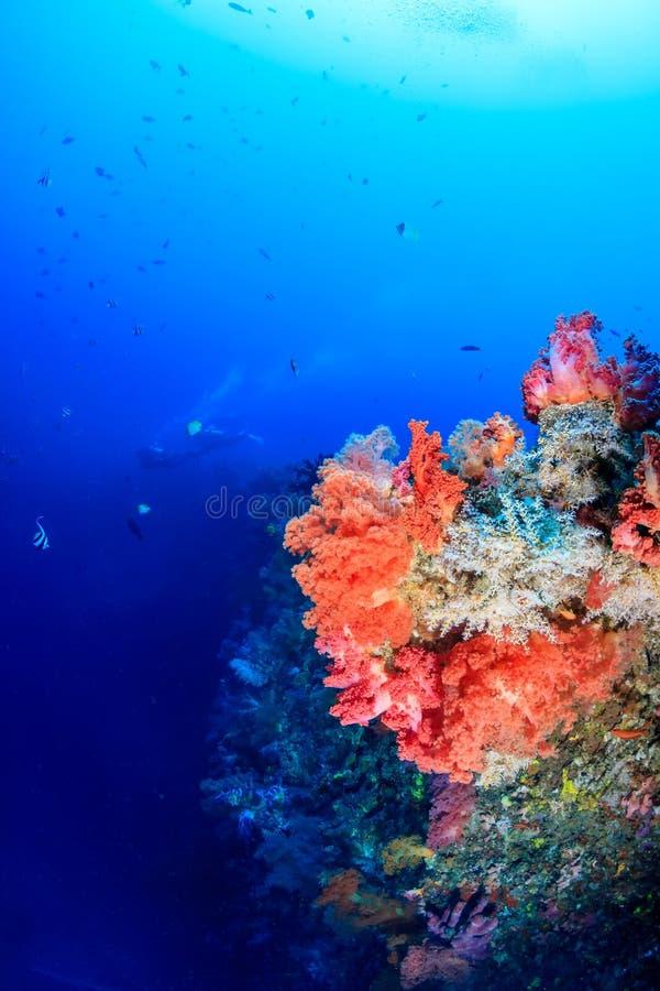 Pesce variopinto e coralli su una scogliera profonda con i subaquei dietro fotografia stock libera da diritti