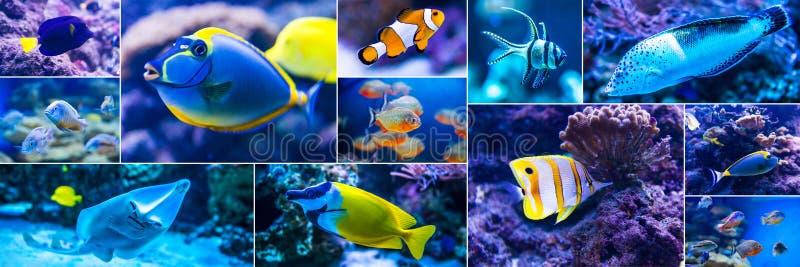 Pesce variopinto in mondo dell'acqua salata dell'acquario immagine stock libera da diritti