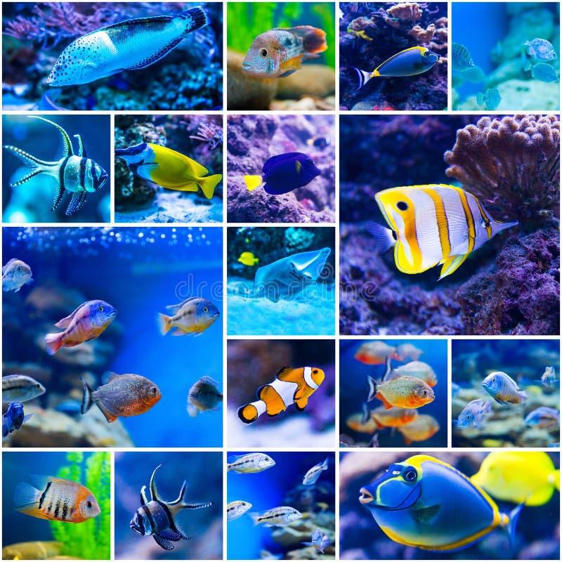 Pesce variopinto in mondo dell'acqua salata dell'acquario immagine stock