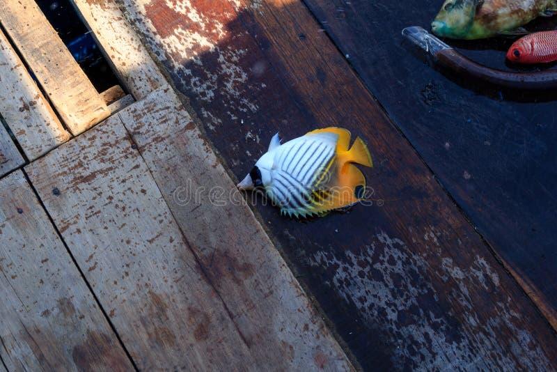 Pesce variopinto sul pavimento fotografia stock