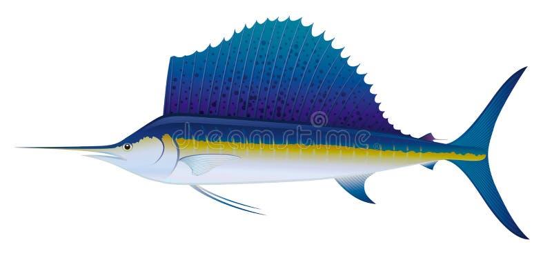 Pesce vela del Pacifico atlantico. illustrazione vettoriale