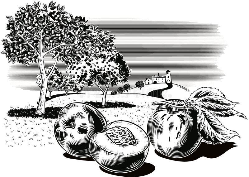 Pesche in un frutteto illustrazione vettoriale