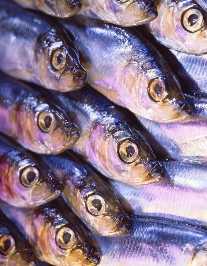 Download Pesci fotografia stock. Immagine di pesci, salute, foodstuffs - 3138364