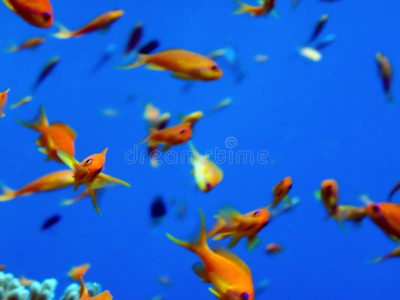 Pesci fotografie stock libere da diritti
