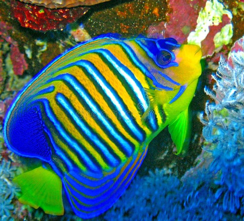 Pesci in acqua fotografia stock libera da diritti