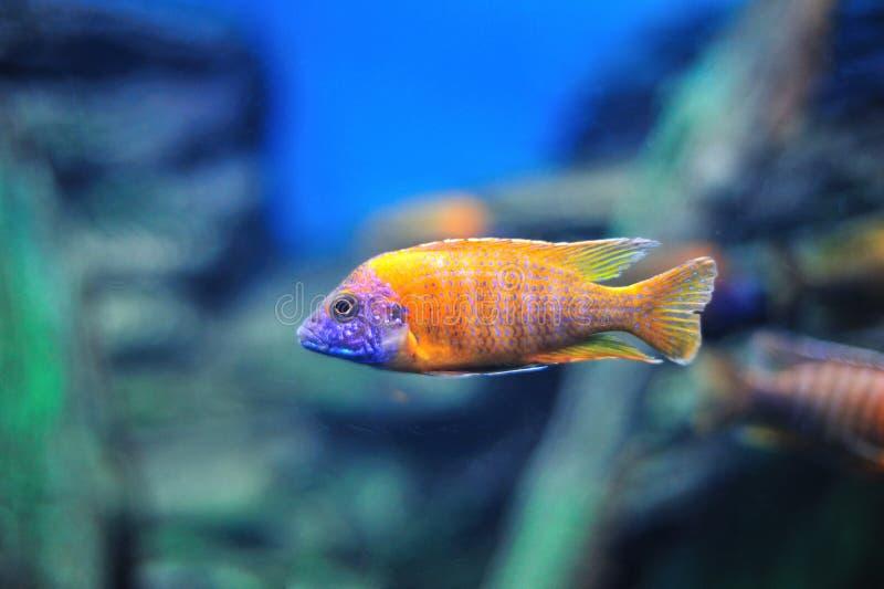 Pesci in acquario immagini stock