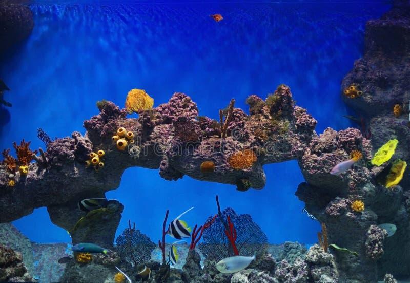 pesci in acquario dell'acqua di mare immagine stock libera da diritti