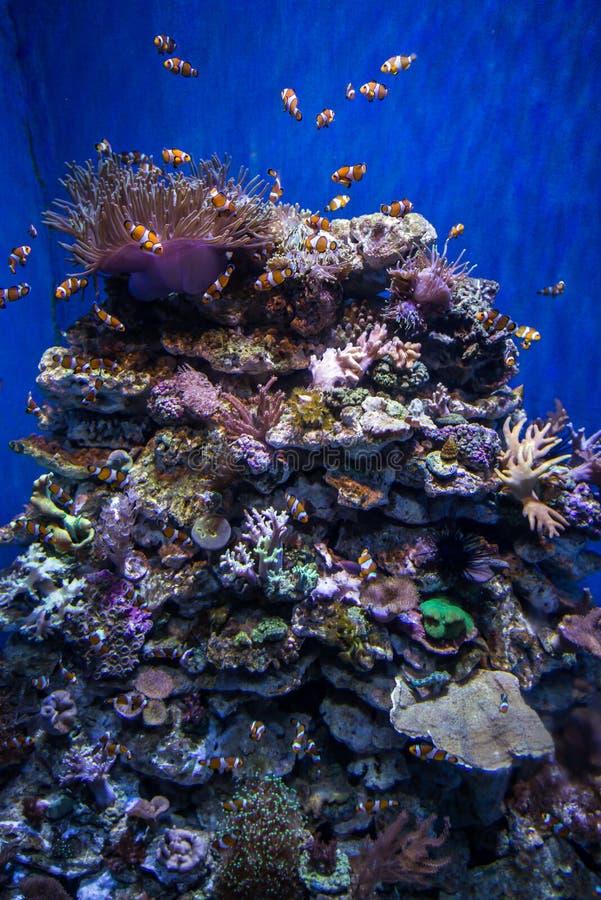 Pesci in aqarium fotografie stock