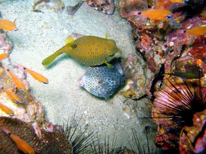 Pesci in barriera corallina variopinta immagini stock libere da diritti