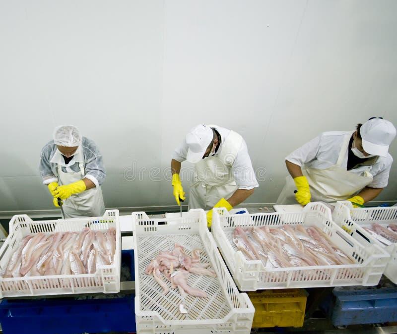 Pesci che elaborano la catena di montaggio fotografia stock libera da diritti