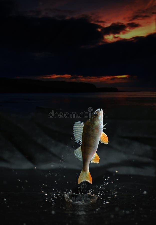 Pesci Che Saltano Immagini Stock