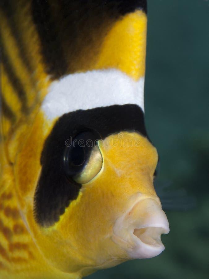 Pesci Colourful fotografia stock libera da diritti