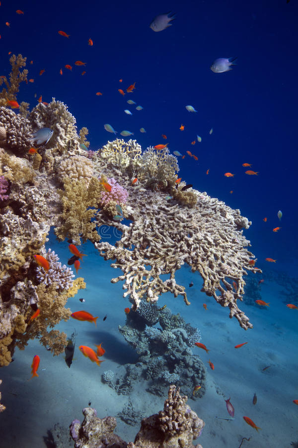 Pesci & coralli in acque tropicali fotografie stock