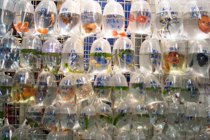 Pesci da vendere a Hong Kong immagini stock