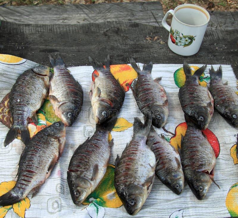 Pesci del fiume immagine stock immagine di pesci fiume for Pesci di fiume