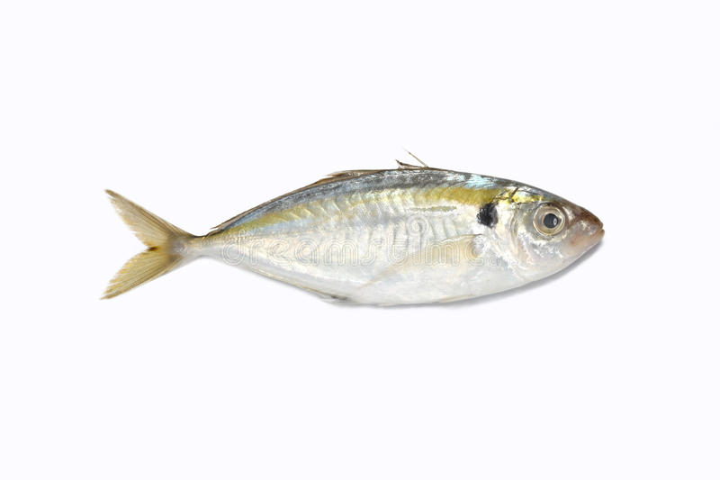 Pesci del raso