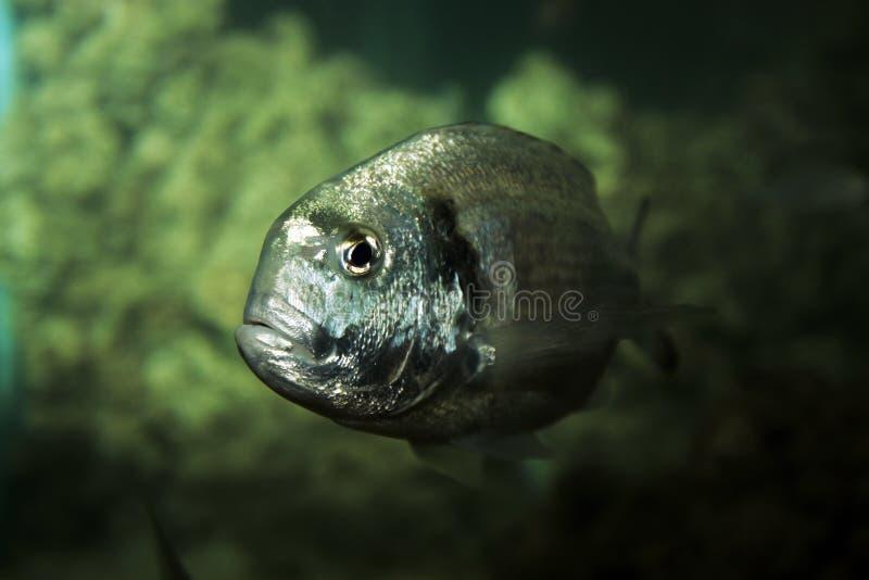 Pesci dell'acquario fotografia stock
