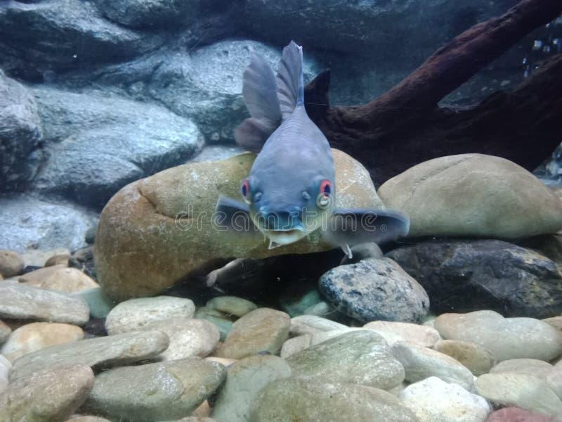 Pesci 11 dell'acquario immagine stock