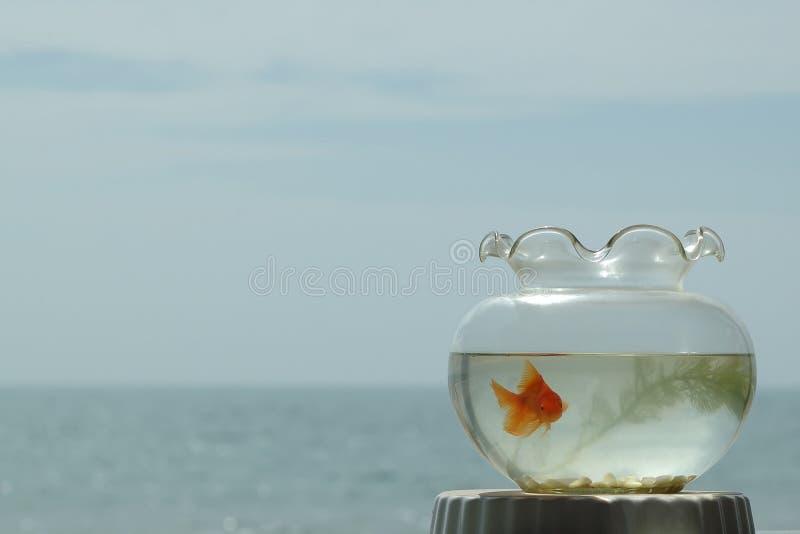Download Pesci dell'oro fotografia stock. Immagine di animali, pesci - 3886610