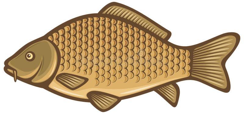 Pesci della carpa illustrazione vettoriale