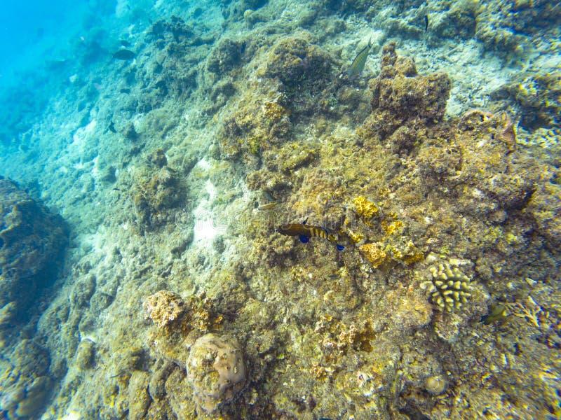 Pesci delle Maldive della scogliera fotografia stock