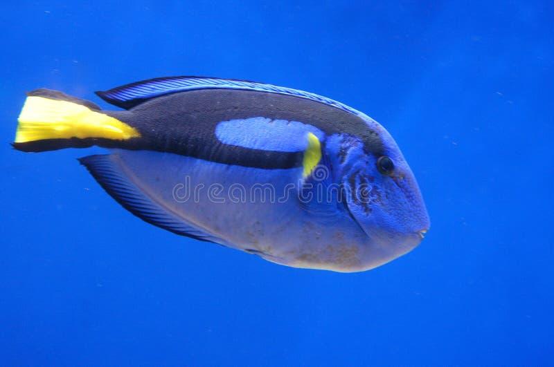 Pesci di corallo fotografie stock