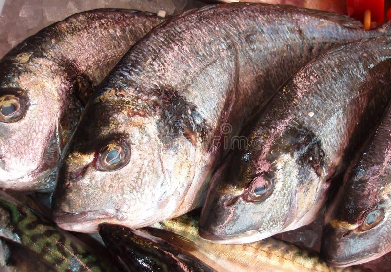 Pesci di Dorade fotografia stock libera da diritti
