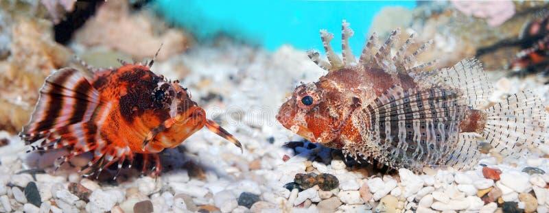 Pesci di mare. fotografia stock libera da diritti