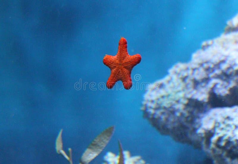 Pesci di mare fotografie stock libere da diritti
