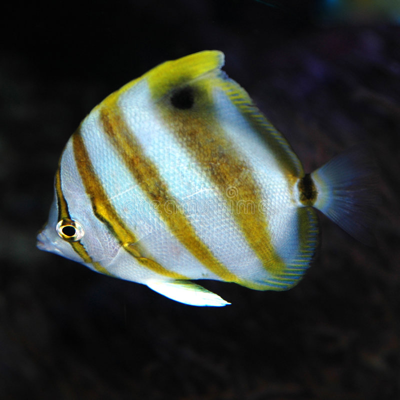 Pesci di mare fotografia stock