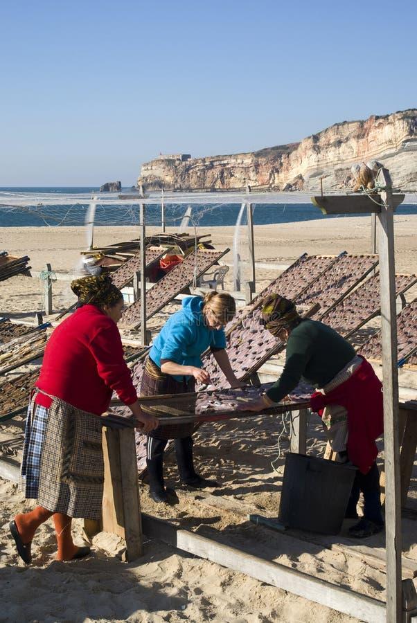 Pesci di secchezza sulla spiaggia in Nazare, Portogallo immagini stock