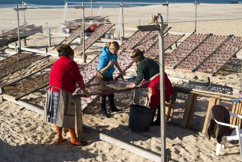 Pesci di secchezza sulla spiaggia in Nazare, Portogallo immagini stock libere da diritti