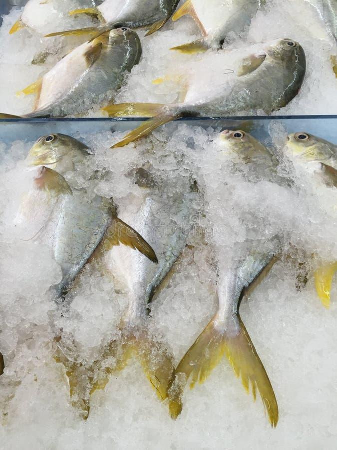 Pesci dorati dei pesci castagna fotografia stock