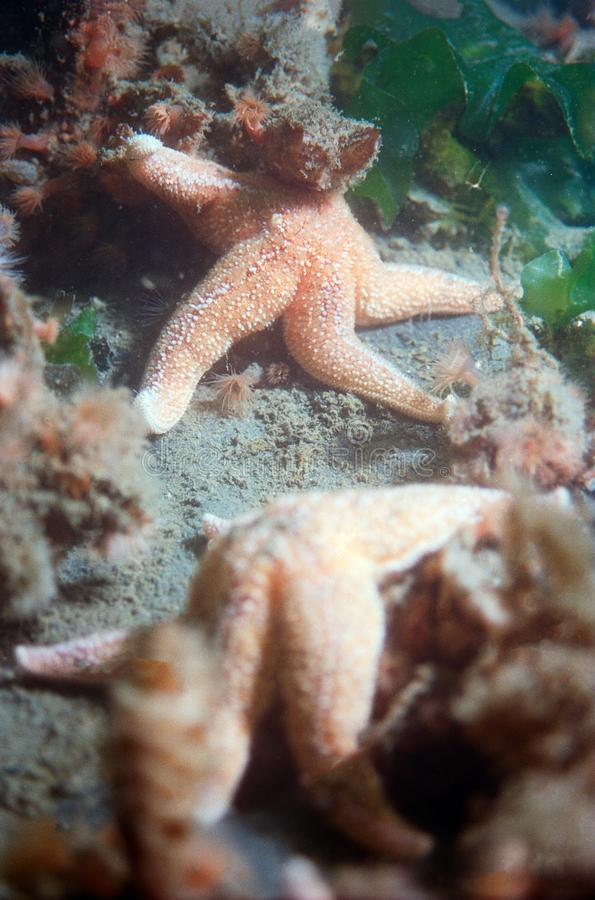Pesci due stelle al Oosterschelde fotografia stock