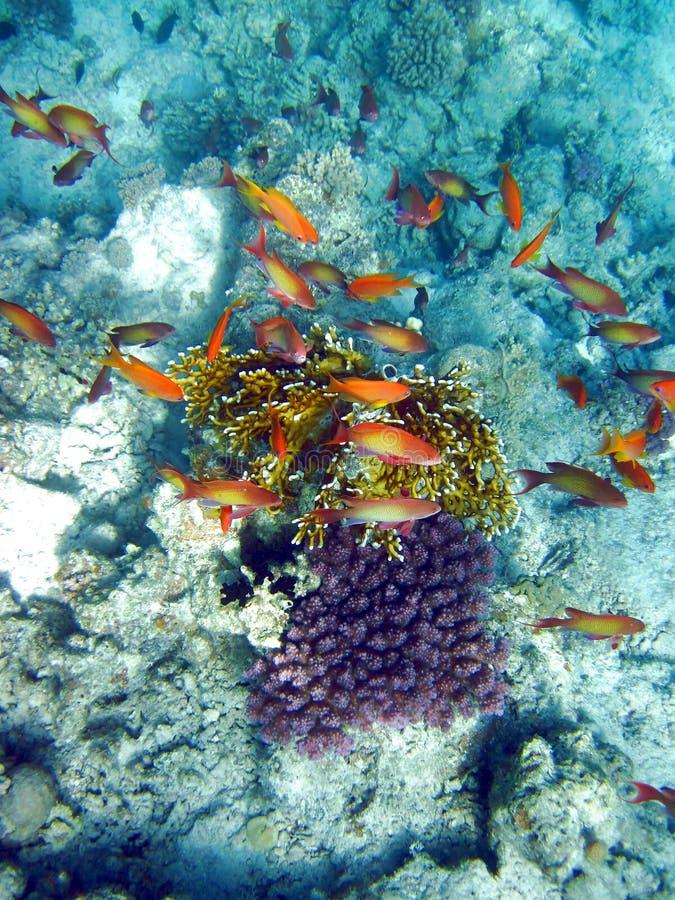 Pesci e barriera corallina fotografia stock libera da diritti