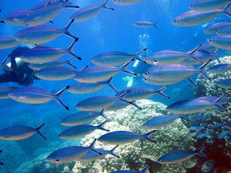 Pesci e barriera corallina immagini stock libere da diritti
