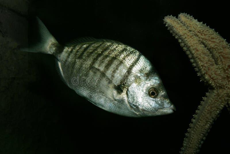 Pesci e stella di mare fotografia stock libera da diritti