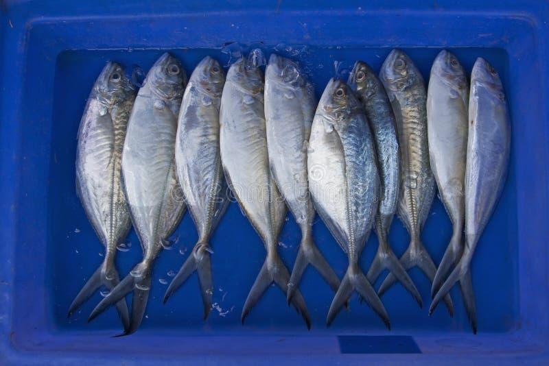 Pesci freschi immagini stock libere da diritti