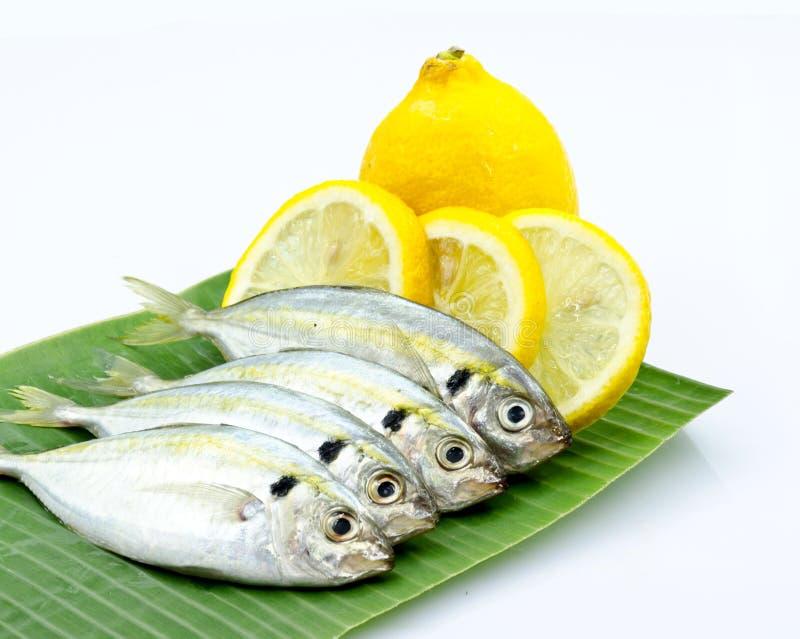 Pesci freschi e limone fotografie stock libere da diritti