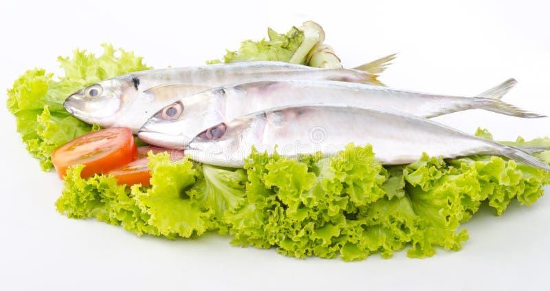 Pesci freschi isolati su bianco fotografia stock libera da diritti