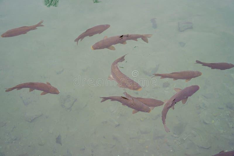 Pesci freschi nel servizio immagine stock