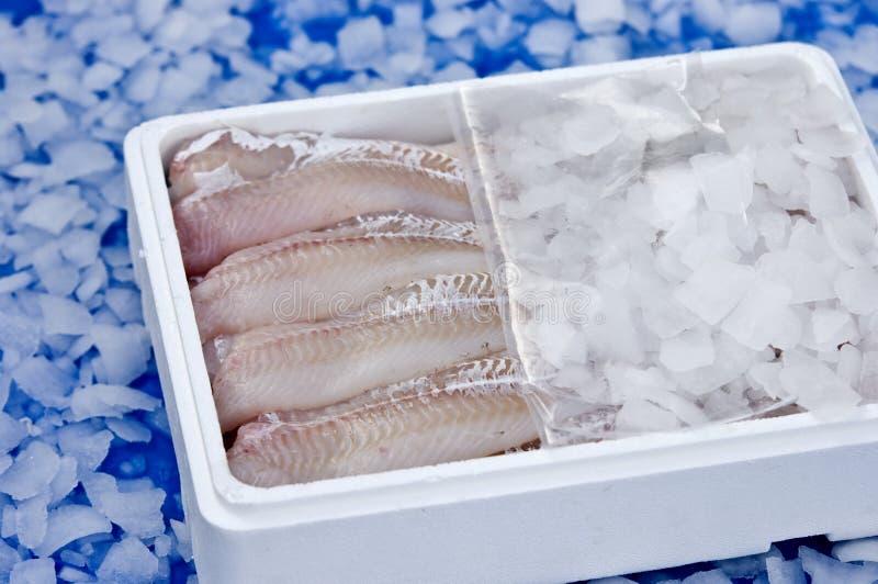 Pesci in ghiaccio fotografie stock