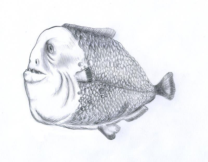 Download Pesci grassi del piranha illustrazione di stock. Illustrazione di piranha - 7323139