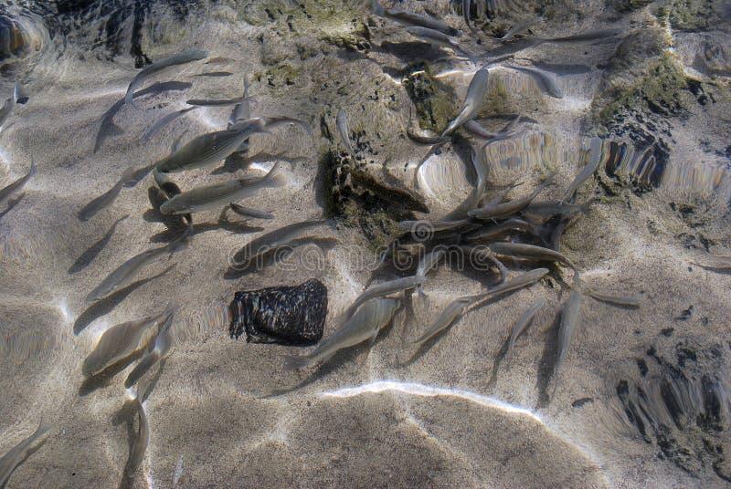 Pesci nel mare fotografia stock
