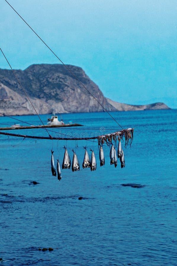 Pesci pescati che appendono sopra il mare immagine stock libera da diritti