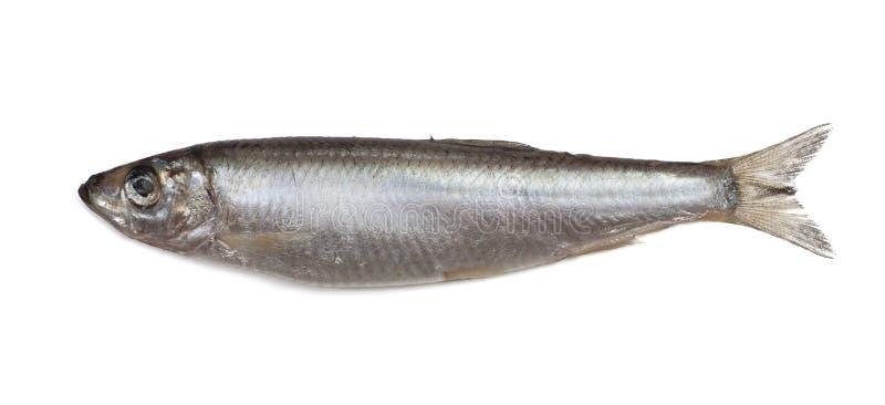 Pesci salati dello spratto fotografia stock