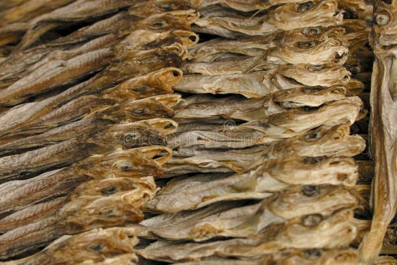 Pesci secchi immagine stock