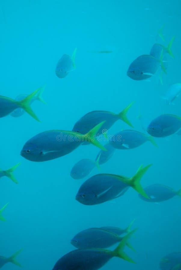 Pesci - sotto acqua fotografia stock