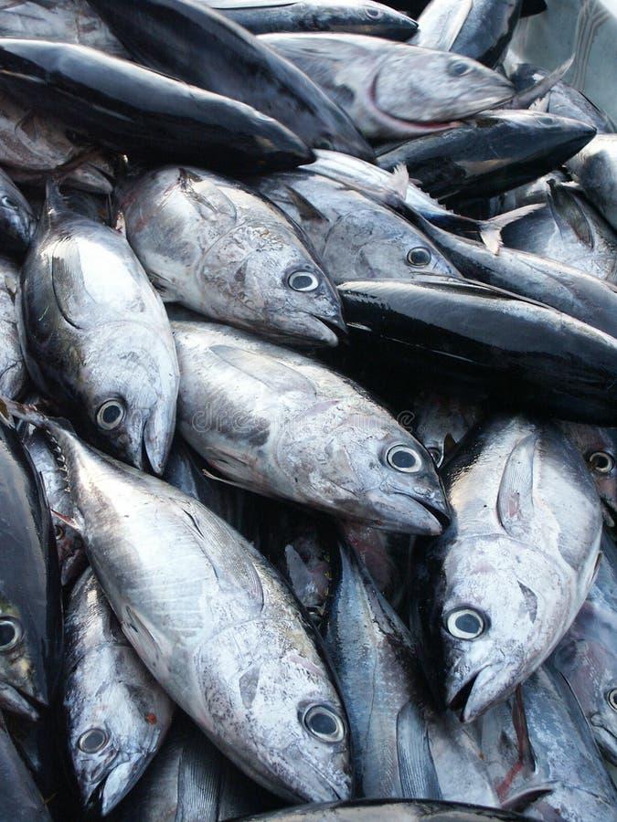 Pesci su Fishmarket immagine stock libera da diritti