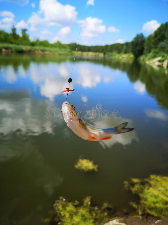 pesci sull'amo pesce, da pesca fotografia stock
